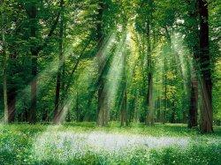 blessings-of-sunshine